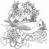 Coloring Pages 1000 Bird Adults Printable Getcolorings sketch template