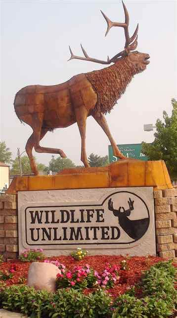 wildlife unlimited an attraction on the wild side