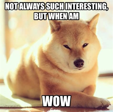Doge Meme Meaning - 25 best ideas about doge on pinterest doge meme funny doge and moon moon memes