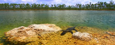 Glass Bottom Boat Tours Everglades by Florida Boating Restrictions In Everglades Park Ship