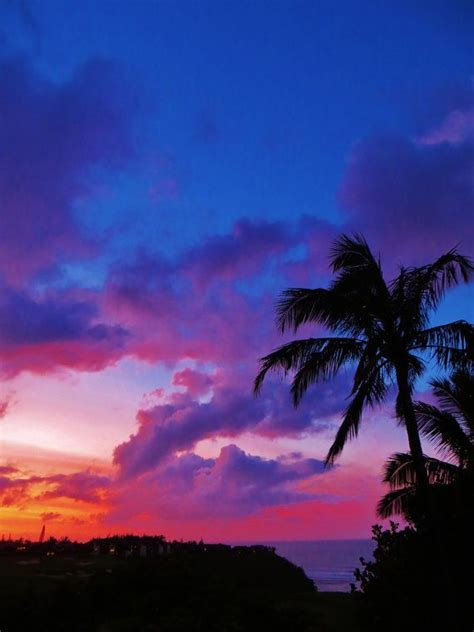 images  palm trees  pinterest palm trees