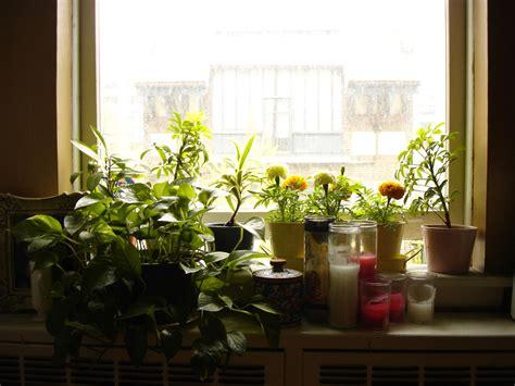 Plant On Windowsill To Other Plant On Windowsill, August