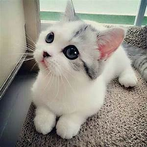 Cute Kitty! | Cats and Friends | Pinterest | Kitty, Cat ...
