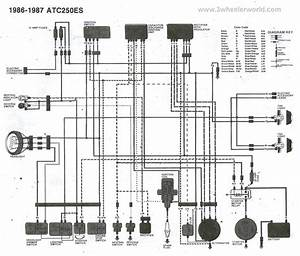 Honda 300ex Wiring Diagram Pics
