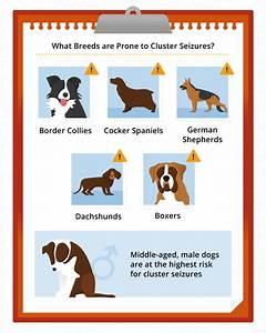 cluster seizures dogs