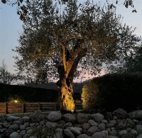 alberi per giardino illuminazione alberi piante e fiori illuminazione giardino