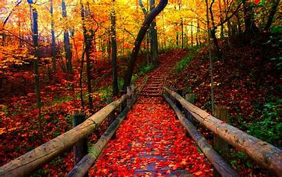 Fall Season Autumn Nature Seasons Leaves Leaf
