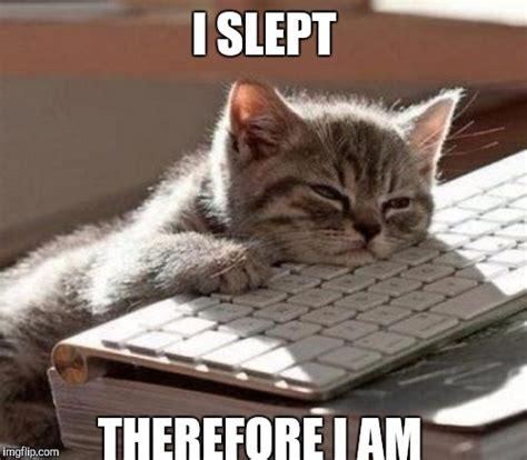 Cute Cat Meme Generator - cute cat meme imgflip