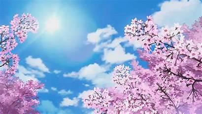 Anime Scenery Cherry Blossom Aesthetic Tree Blossoms