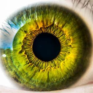 Free Picture  Human Eye  Unique  Look  Anatomy  Biology