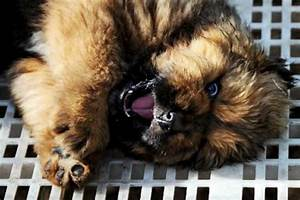 the most expensive dog ever luxury topics luxury portal With expensive dog toys