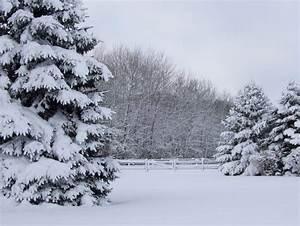 Beautiful Winter Wonderland Wallpaper (43+ images)