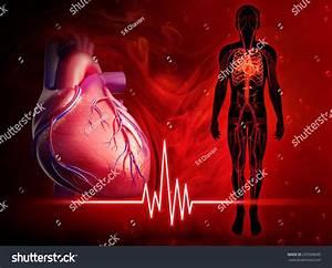 Illustration Of Human Heart Beat Diagram