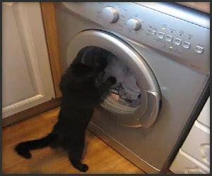 cat  washing machine