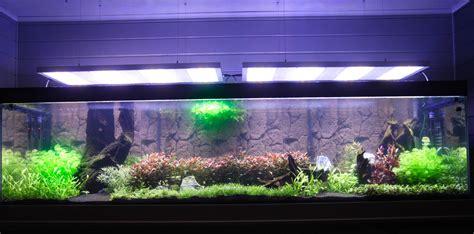 temps d eclairage aquarium eclairage aquarium eau douce 28 images l 233 clairage dans un aquarium d eau douce type