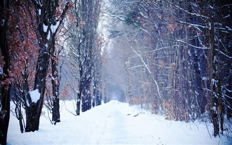 Background Winter Theme by Winter Backgrounds Background 1 Hd Wallpapers S