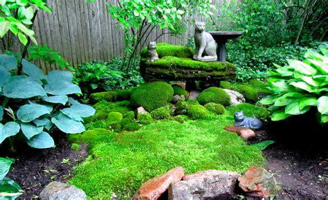 gardening moss cheesehead gardening sievert s moss garden