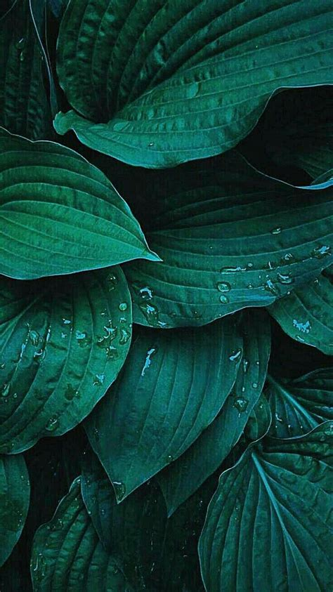 Abstract Green Leaf Wallpaper by Random Phone Wallpaper Random Phone Wallpapers Iphone