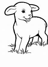 Lamb Coloring Sheep Grass Pages Drawing Eating Colouring Sheet Printable Sheets Sky Getdrawings Getcolorings sketch template