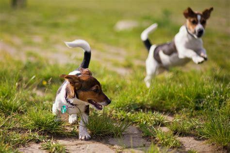 globuli gegen durchfall hund infos einnahme dosierung