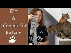 Gemüse Für Katzen : diy katzenspielzeug aus socke lifehack f r katzen youtube ~ Watch28wear.com Haus und Dekorationen