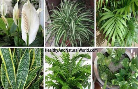 Top 10 Des Meilleures Plantes D'intérieur Purificatrices D