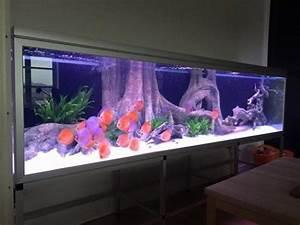 Süßwasserfische Fürs Aquarium : ber ideen zu diskusfische auf pinterest ~ Lizthompson.info Haus und Dekorationen