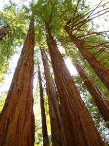 San Francisco Muir Woods National Park