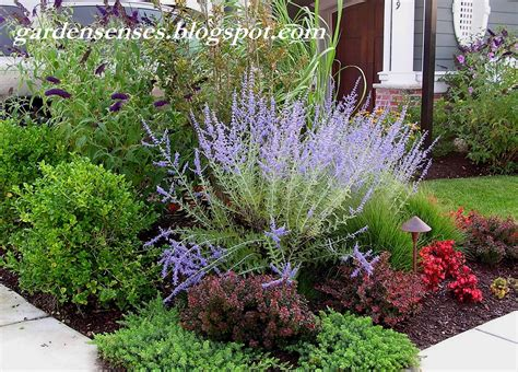 easy care plants for landscaping easy care garden with russian sage perovskia crimson pygmy barberry juniper japanese holly