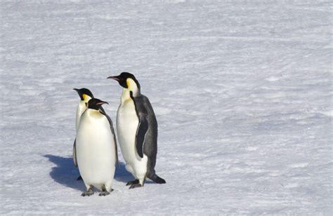 All Penguin Species