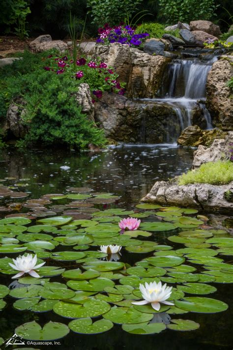 Aquascape Plants List by Top 10 Aquatic Plants For Water Features Ponds And