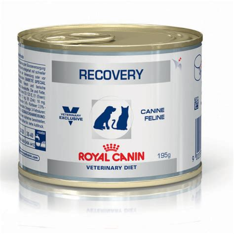 buy royal canin recovery wet dog cat food