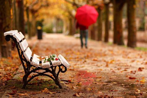 adios goodbye park bench flower rose man maintenance