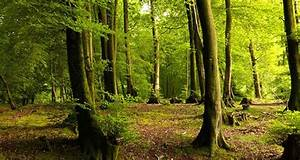 25 Interesting Facts About Forests