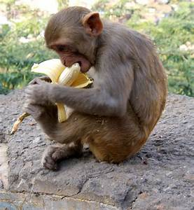 15 Odd And Interesting Facts about Monkeys