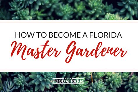 how to become a master gardener how to become a florida master gardener