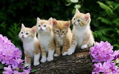 Animal Computer Desktop Kitten