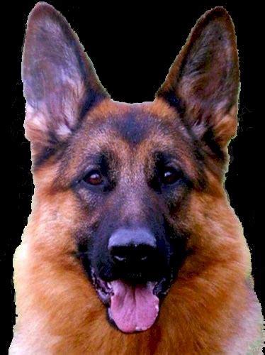 Los Mejores Perros Guardianes Yoremes Weblog