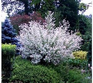 Pflanzen Für Den Garten : exotische pflanzen fur den garten ~ Frokenaadalensverden.com Haus und Dekorationen