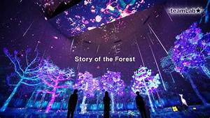 Story, Of, The, Forest