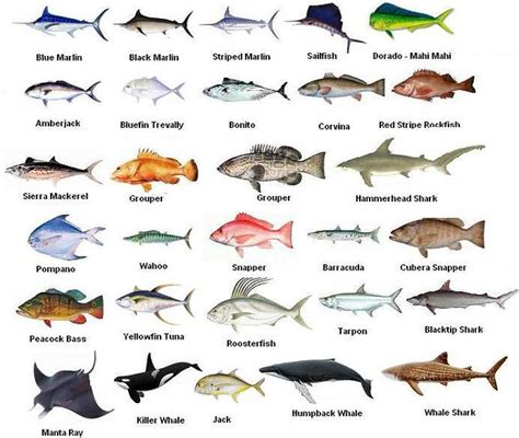 panama fish species pacific ocean panama travel group
