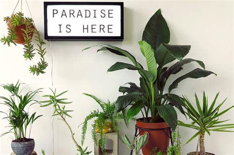 tanaman cocok hiasan ruangan furnizing