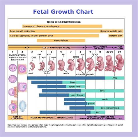 pin de amelia melendez en english tools fetal growth