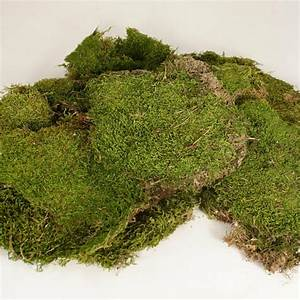 Sheet Moss 375 Sq  Inches Natural Green  Larger Quantities