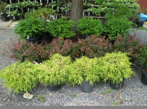 landscaping shrubs and bushes pictures exceptional landscape bushes 5 landscaping with shrubs and bushes newsonair org
