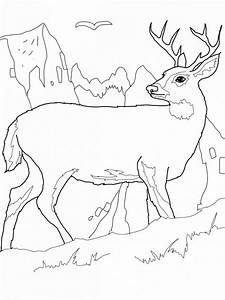 Realistic Ocean Animals Coloring Pages 3 - Realistic ...