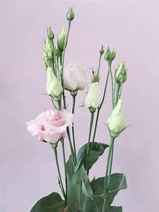 Welche Blumen Blühen Im August : welche blumen gibt es im august hochzeitsfloritik hochzeitsdekoration d sseldorf ~ Orissabook.com Haus und Dekorationen