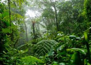 tropical rainforest green plants on the earth world visits