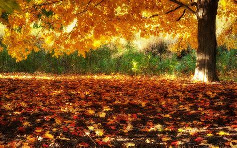 hd fall scenery wallpapers pixelstalknet