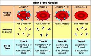 Why Can Type Ab Blood Accept Blood From A And B Type While